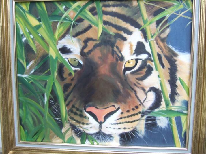 tigre aux aguets